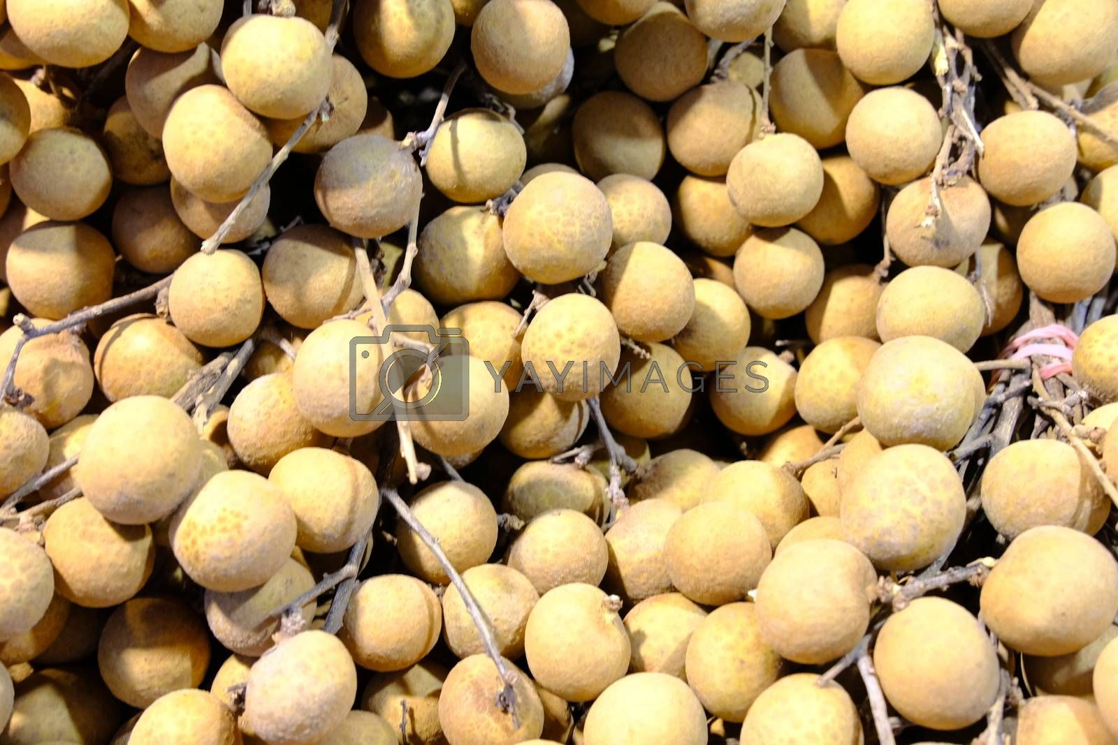 Close up fresh Tropical fruits longan Asian fruit agriculture food isolated.