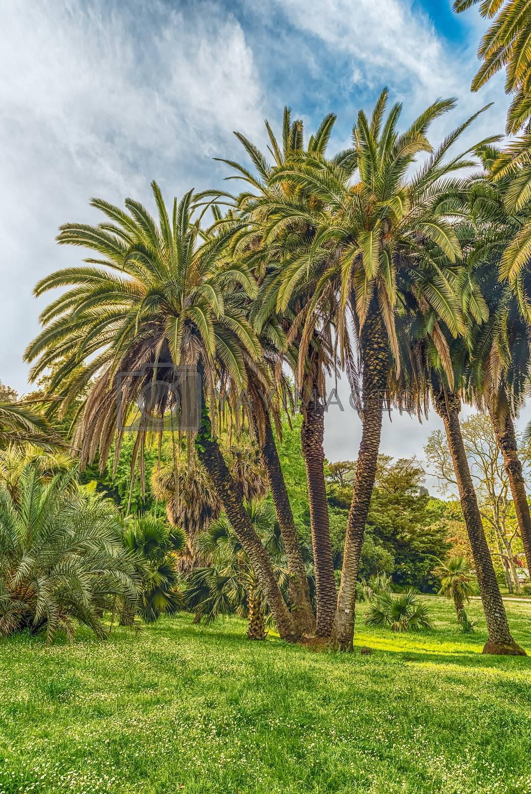 Beautiful palm trees inside a public garden in Rome, Italy
