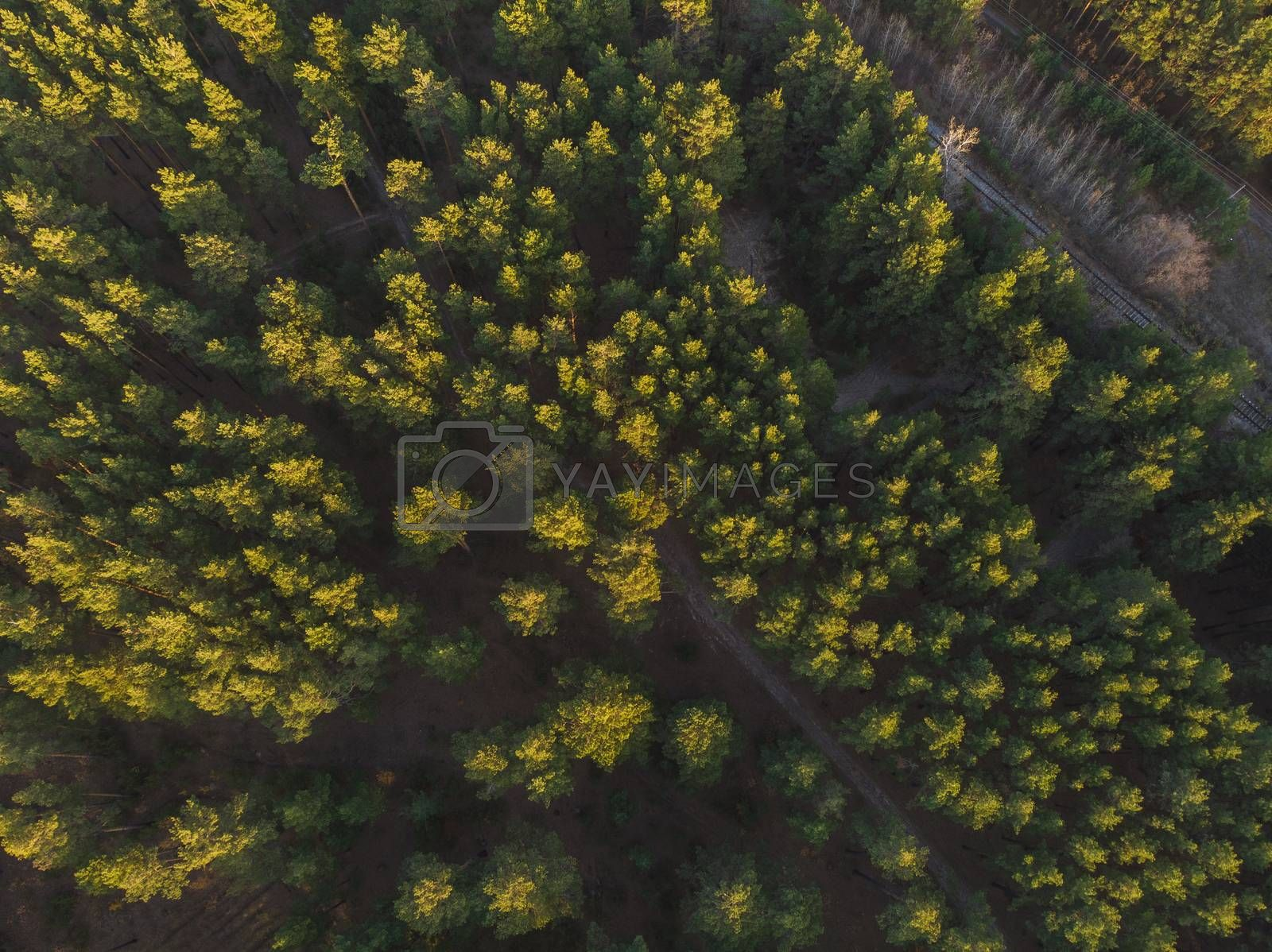 Aerial view of summer siberian forest
