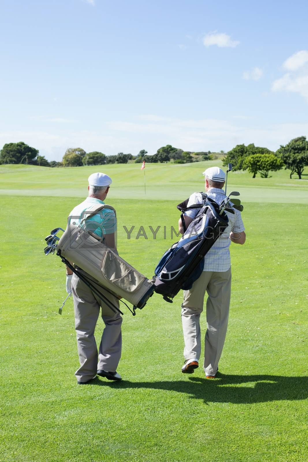 Golfer friends walking and holding their golf bags on a sunny day at the golf course