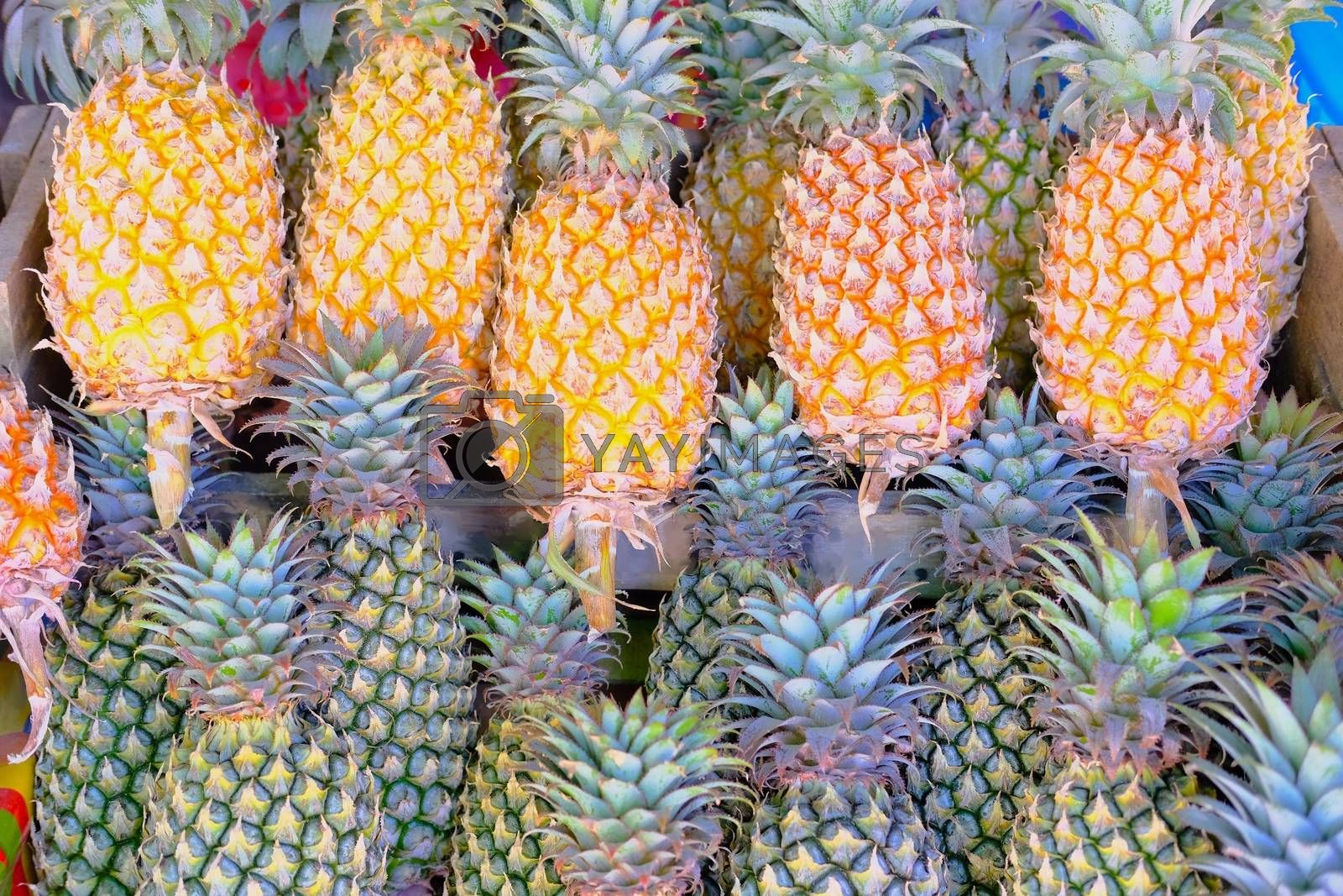 Collection of tropical fruit Sweet Pineapples Stack selling in fruit market.
