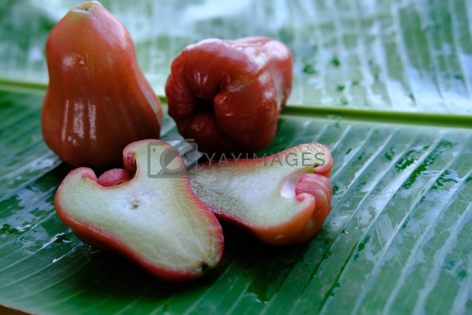Rose Apple ripe fresh exotic fruit whole and cut on the wet banana leaf isolated.