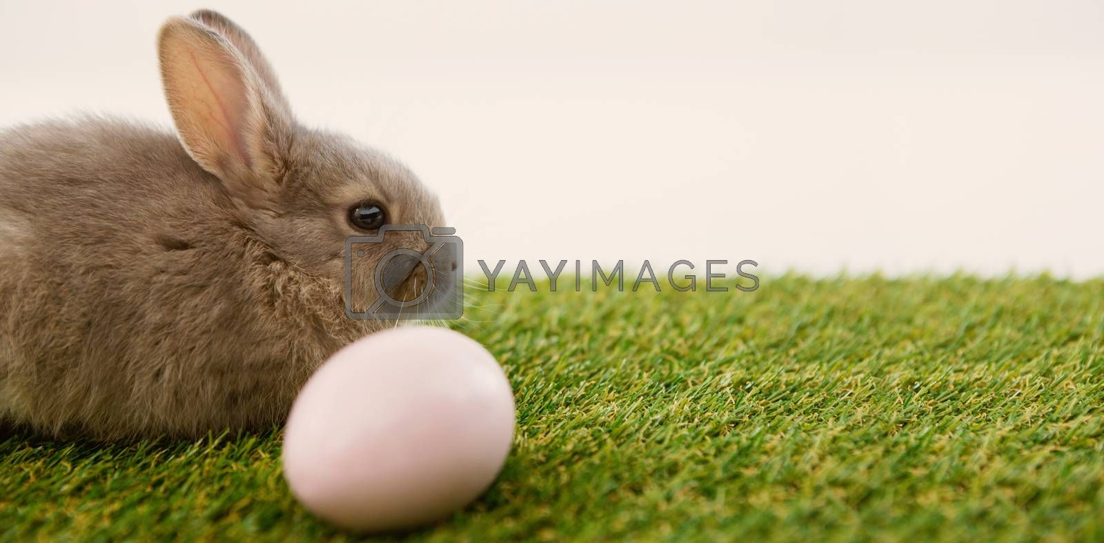 Easter egg and Easter bunny in grass on white background