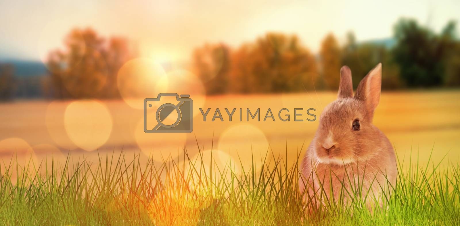 Close-up of Easter bunny against view of grasslands