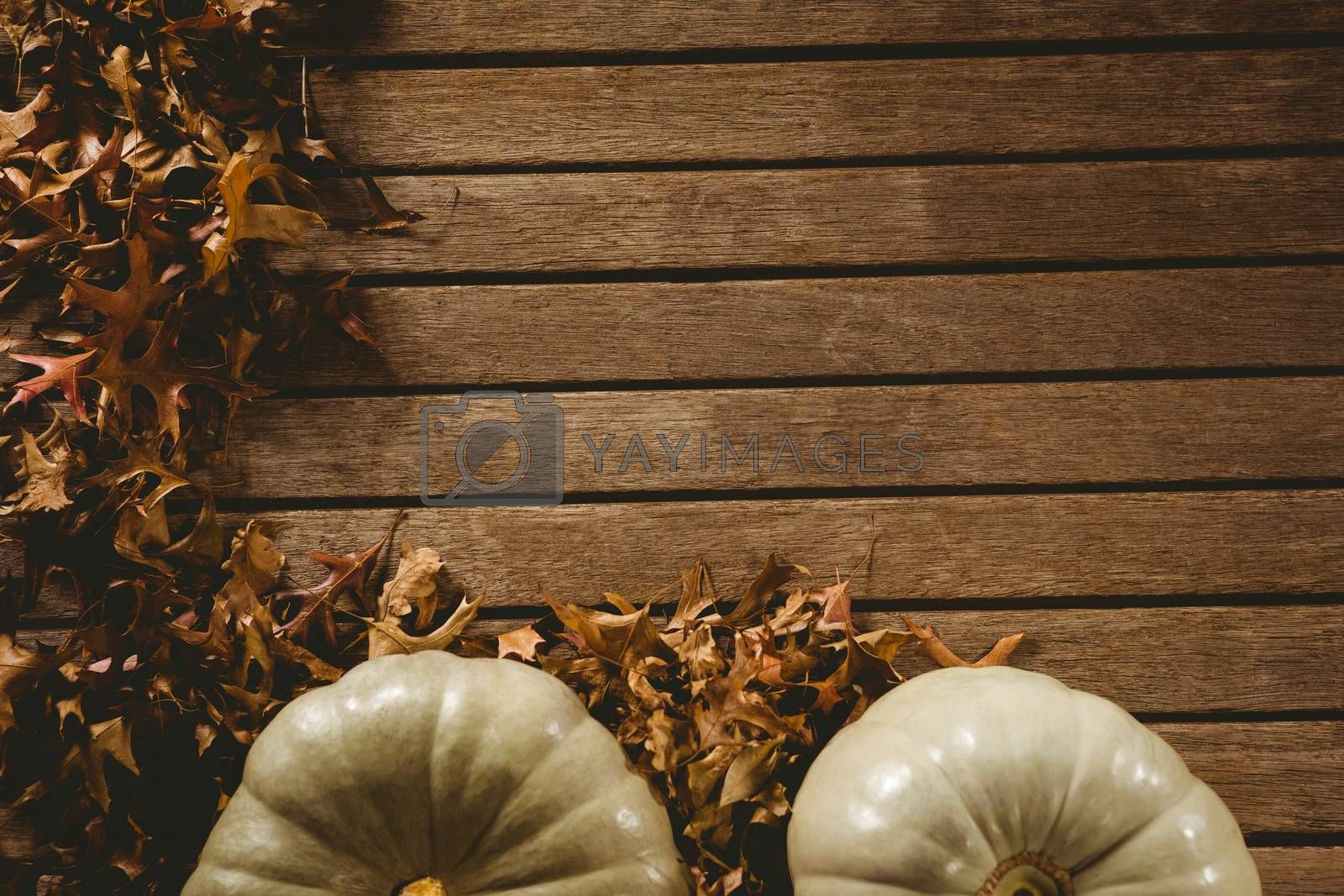 Overhead view of autumn leaves by pumpkins on table during Halloween