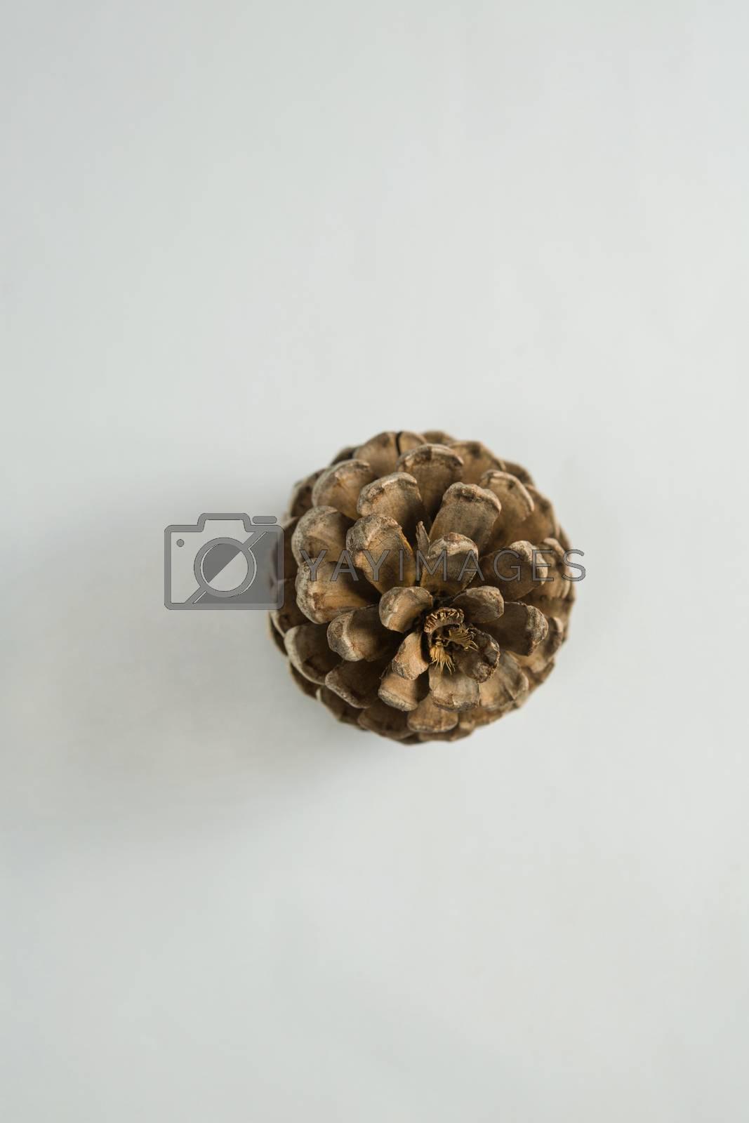 Pine cone on white background by Wavebreakmedia