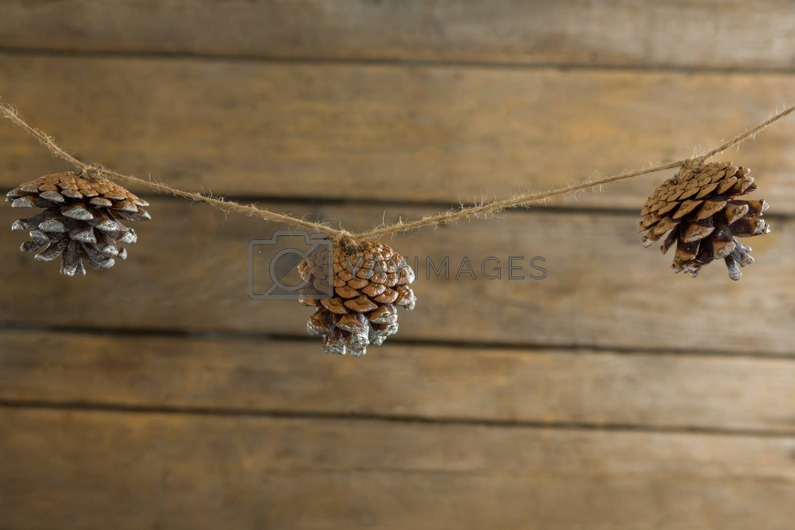 Close up of pine cones hanging on rope by Wavebreakmedia