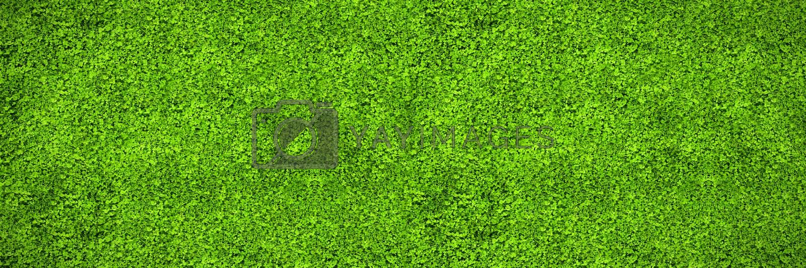 Astro turf surface by Wavebreakmedia