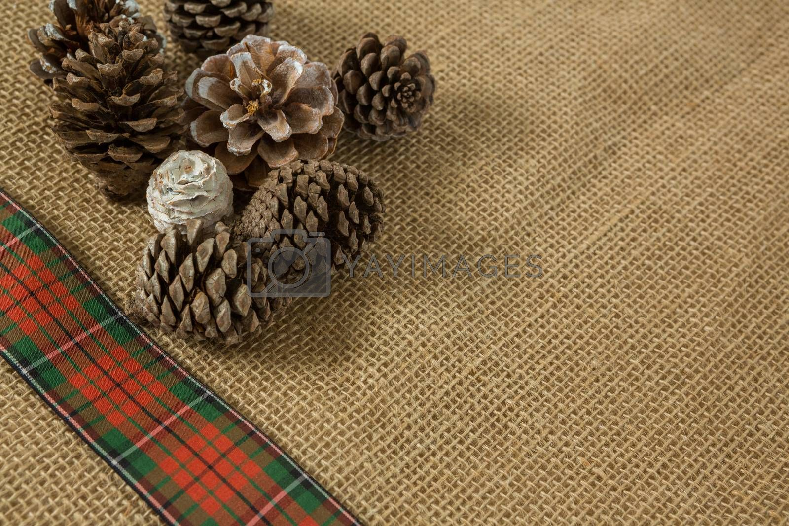 Close up of various pine cones by Wavebreakmedia