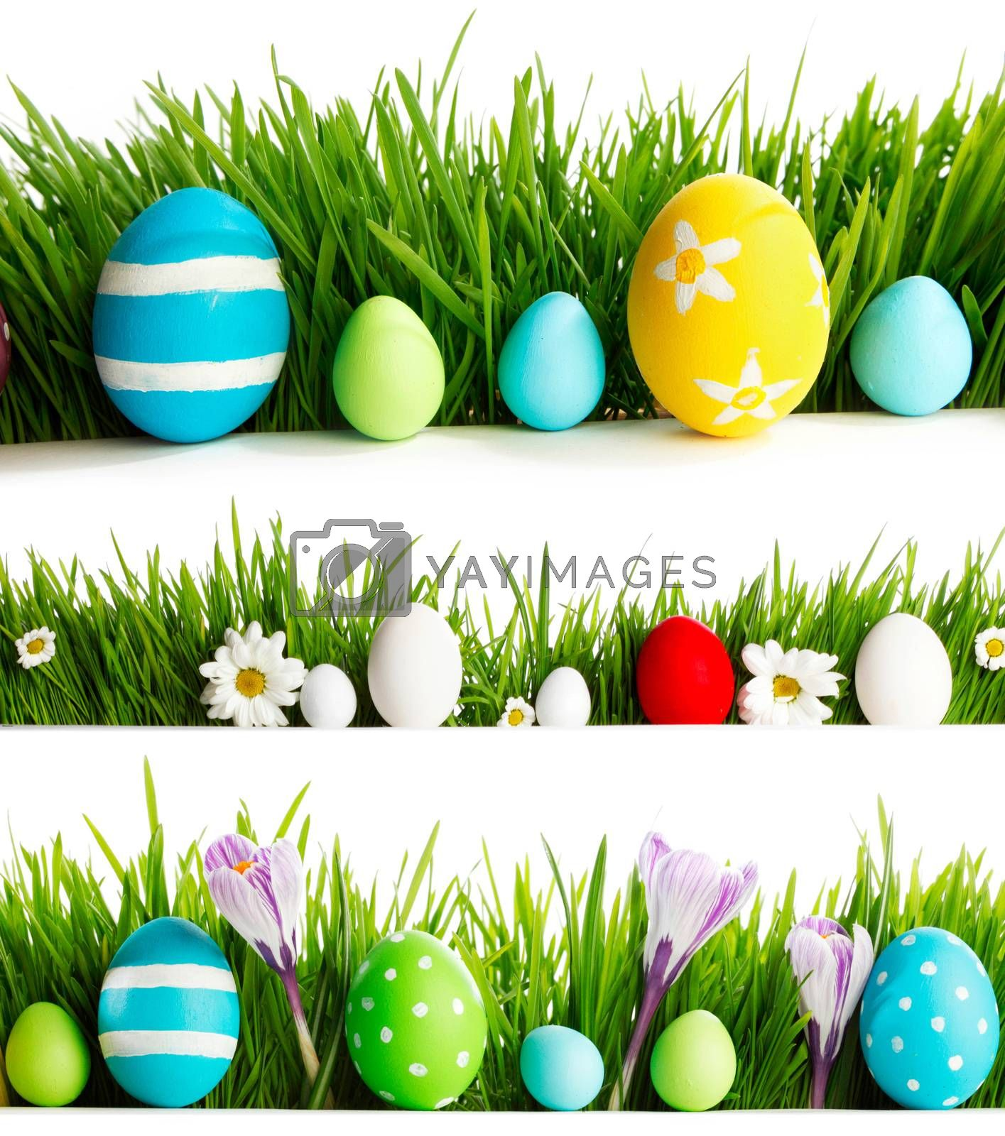 Fresh spring and Easter borders isolated on white background. Eggs, flowers and green grass.