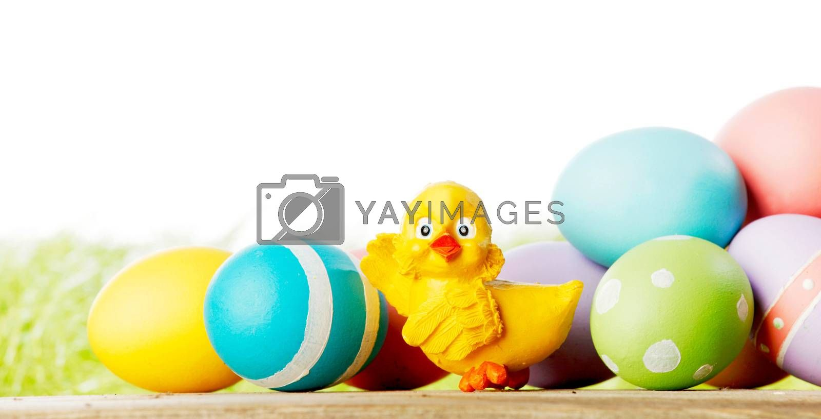 Easter composition with eggs and toy chick on green meadow isolated on white background
