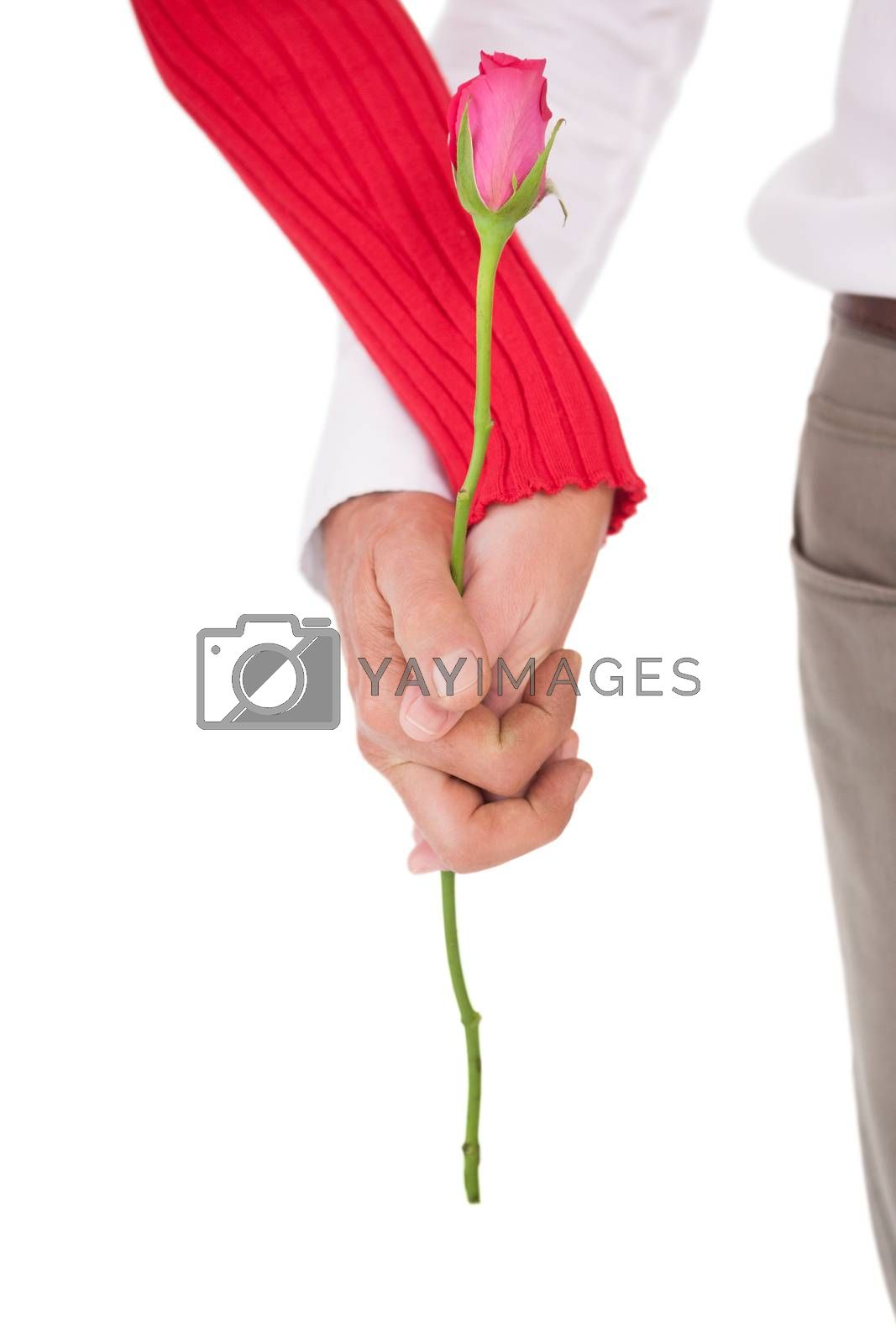 Close up of hands holding rose over white background