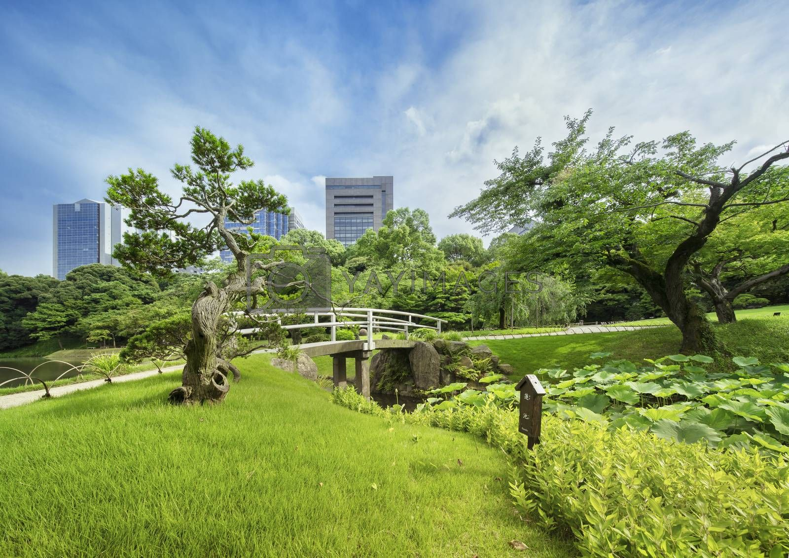 Small Japanese bridge of Koishikawa Korakuen Park in Tokyo surrounded by beautiful pines, maples and cherry trees. It separates the main lake Osensui, which is an evocation of Lake Biwa and the Hasuike Stall filled with sacred lotus whose buds are about to bloom.