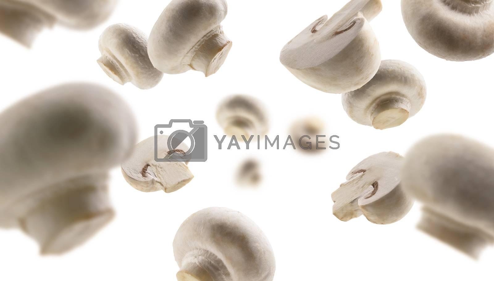 White mushrooms levitate on a white background.