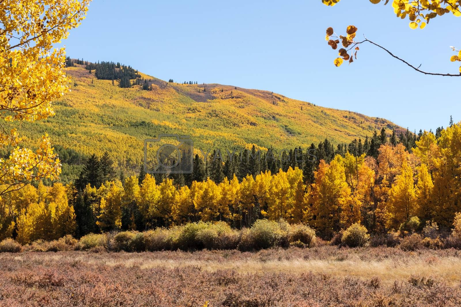 Beautiful and Colorful Colorado Rocky Mountain Autumn Scenery by Gary Gray