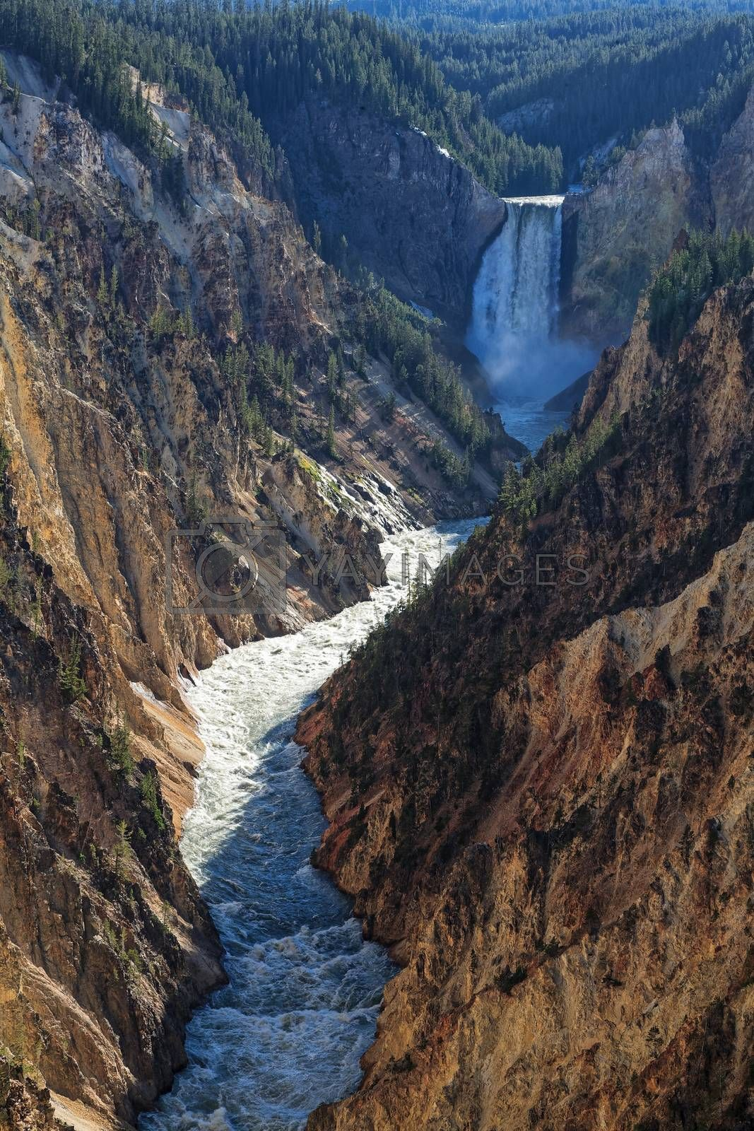 Yellowstone National Park, Wyoming. The Lower Falls as Viewed Fr by Gary Gray