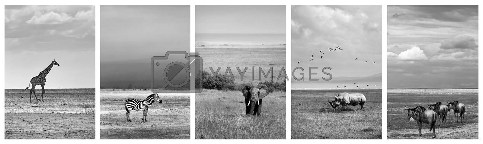 Black and white collage of wildlife photos, safari pictures of a giraffe, zebra, elephant, rhino and wildebeest, adventure travel to Africa, Kenya