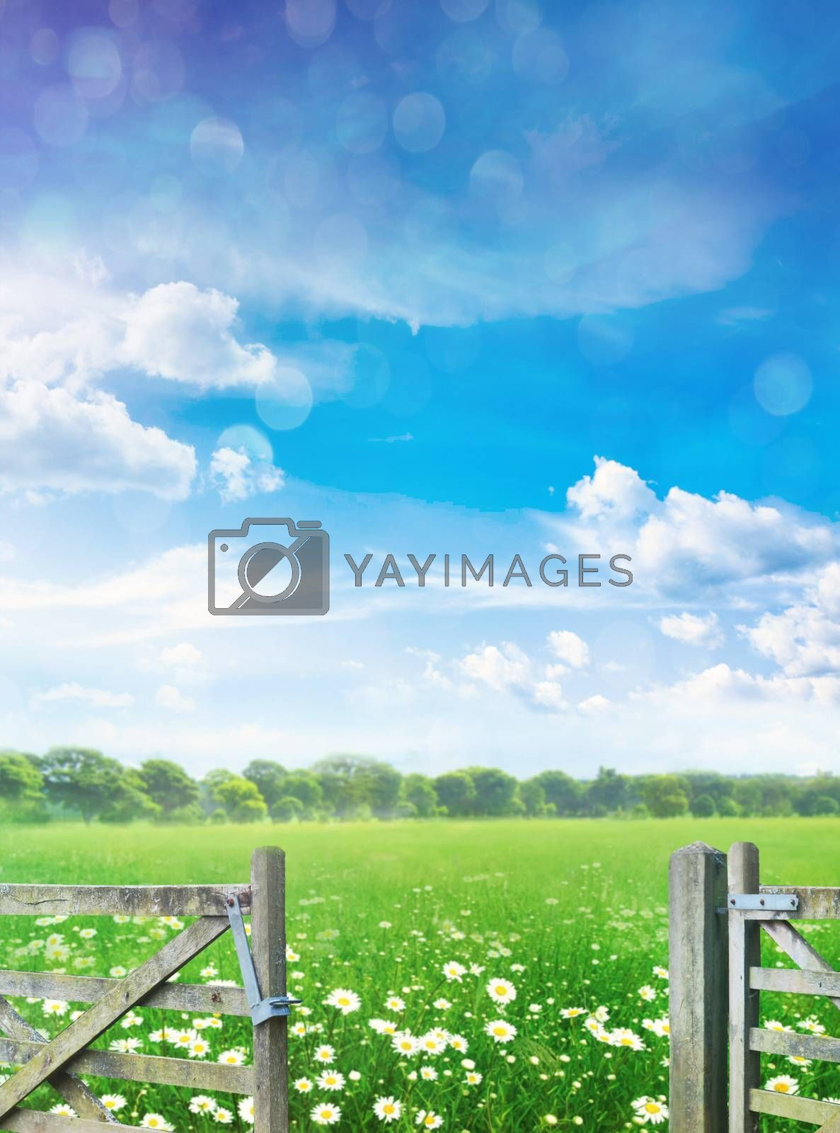 Landscape with flowers in meadow against blue summer sky