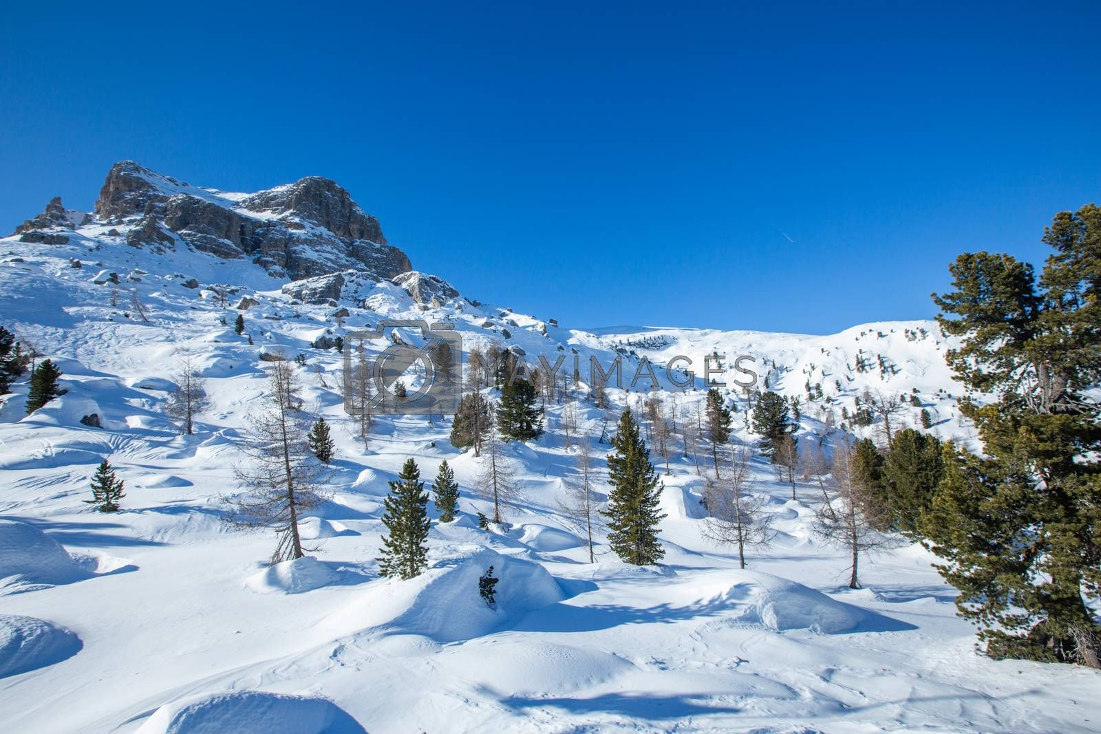 Dolomities Dolomiti Italy in wintertime beautiful alps winter mountains fir and pine trees on freeride slope Cortina d'Ampezzo Cinque torri mountain peaks famous landscape skiing resort area