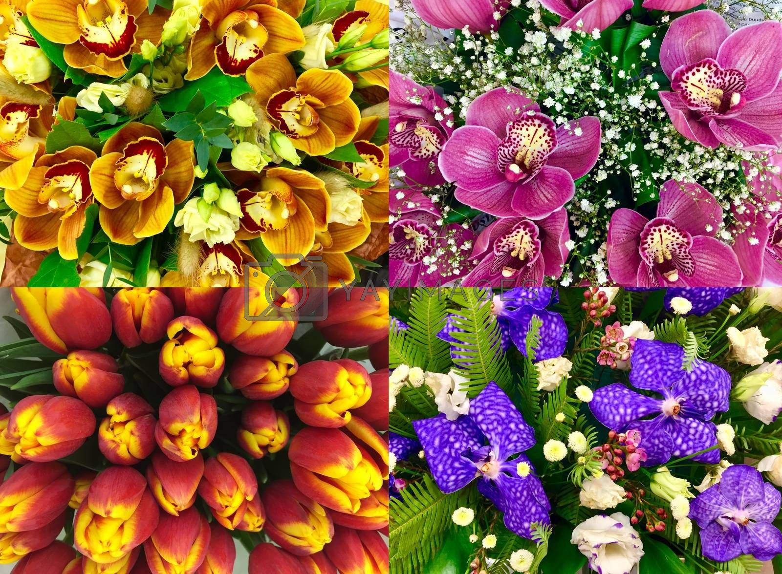 Collage of Orchids and tulips texture. Set of different exotic orchid flower for beautiful nature background. Top view.