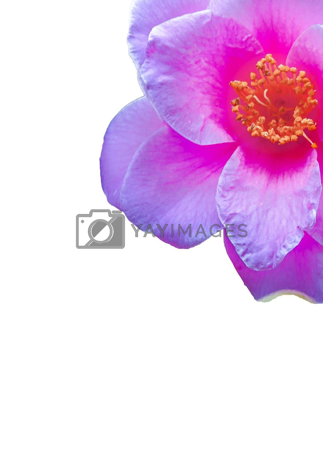 White background with violet flower border decoration