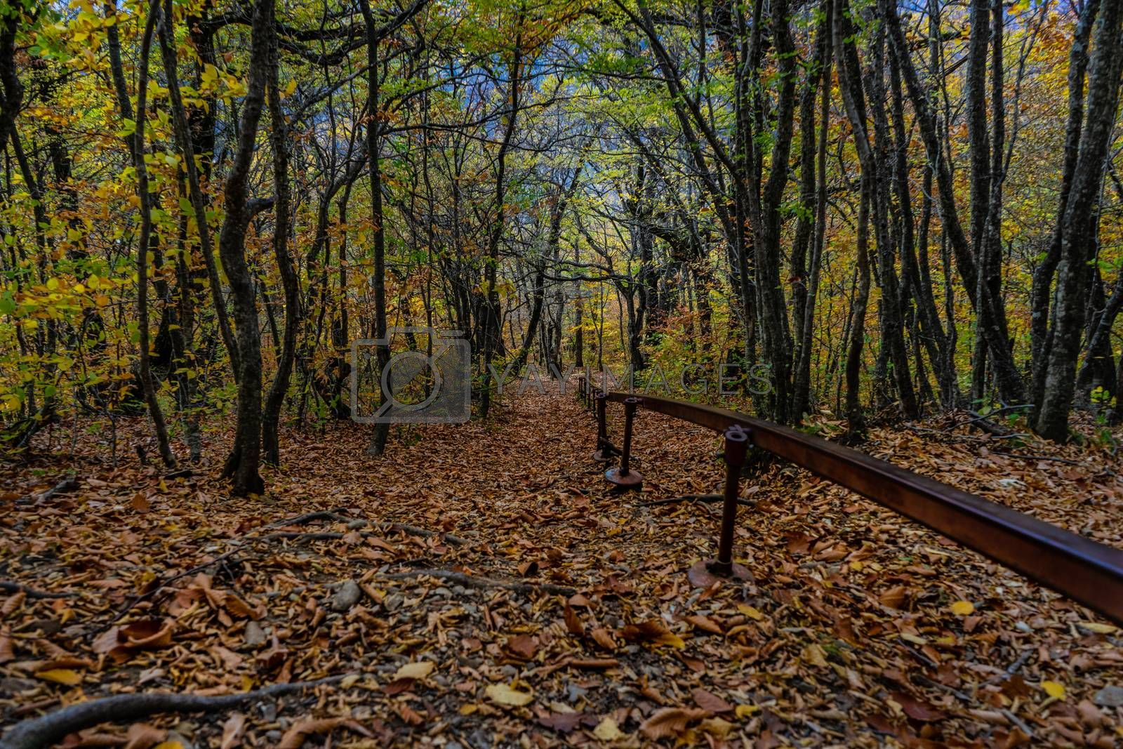 Forest pathway in autumnal Caucasus mountan in Tianeti area in Georgia