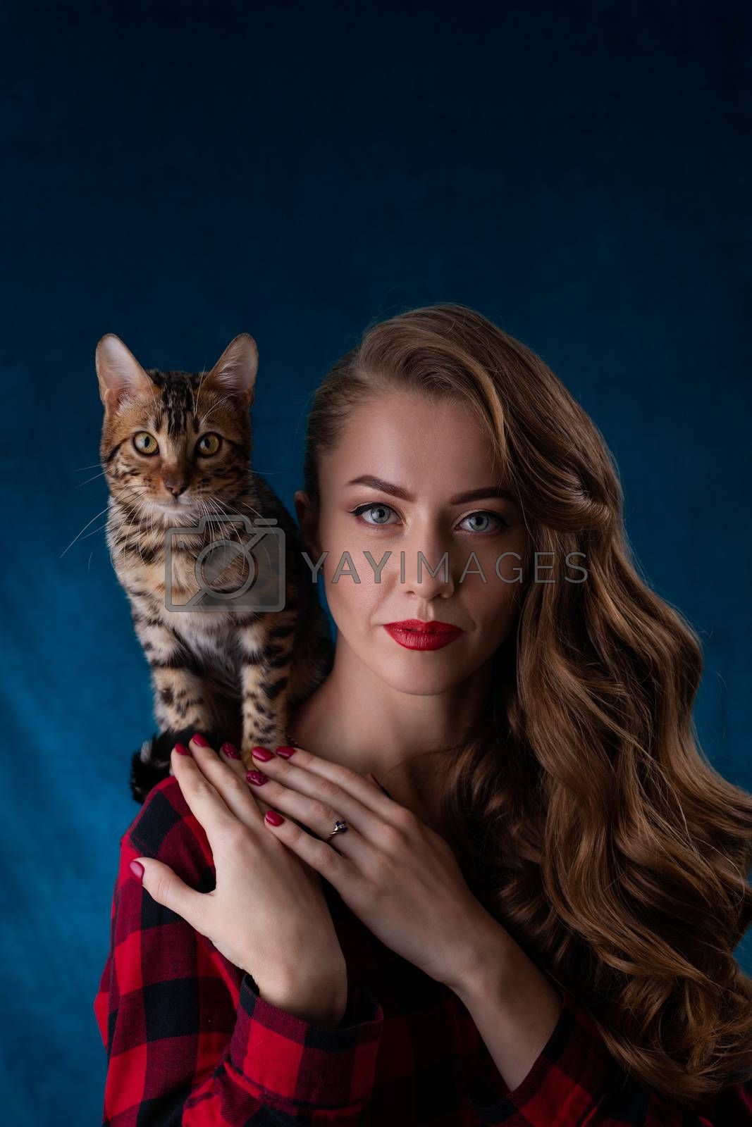 Fashion photo of pretty girl with bengal kitten on shoulder. Bengal cat with beautiful woman on  blue background. Girl and kitten seductively looks at the viewer.