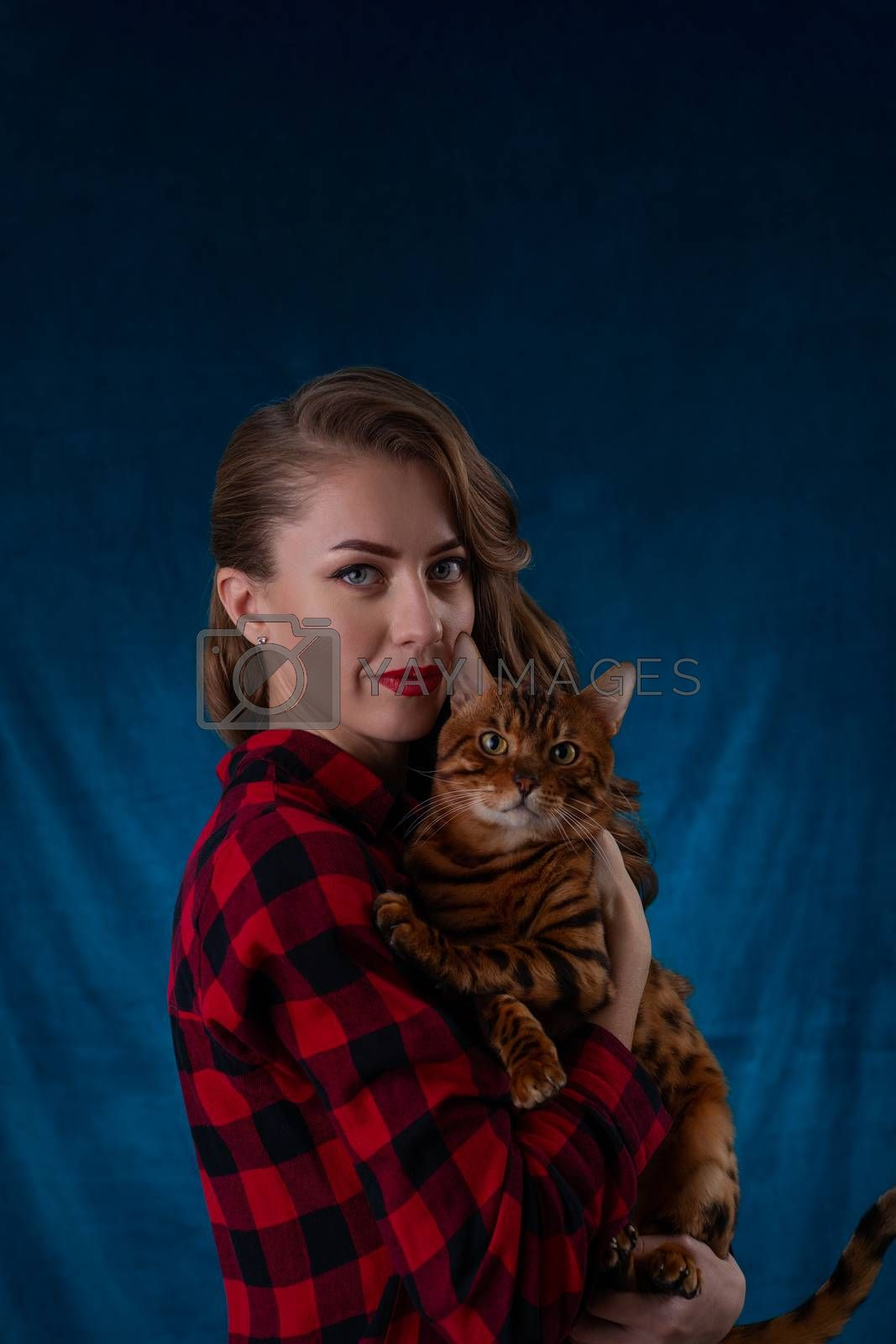 Fashion photo of pretty girl with bengal cat on hands. Bengal cat with beautiful woman on  blue background.