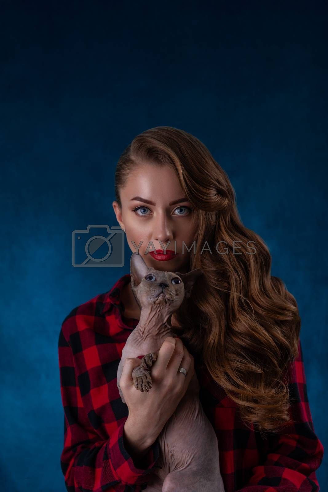 Fashion photo of pretty sexual girl with sphynx cat on hands. Sphynx cat with beautiful woman on  blue background.