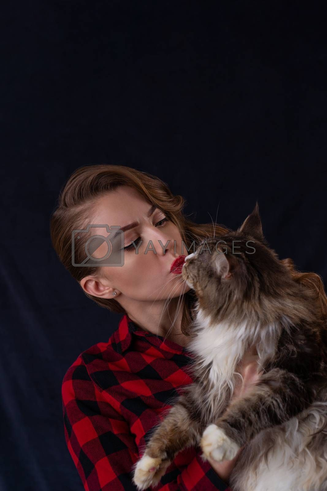 Fashion photo of pretty girl with maine coon cat on hands. Maine coon cat with beautiful woman on gray background.