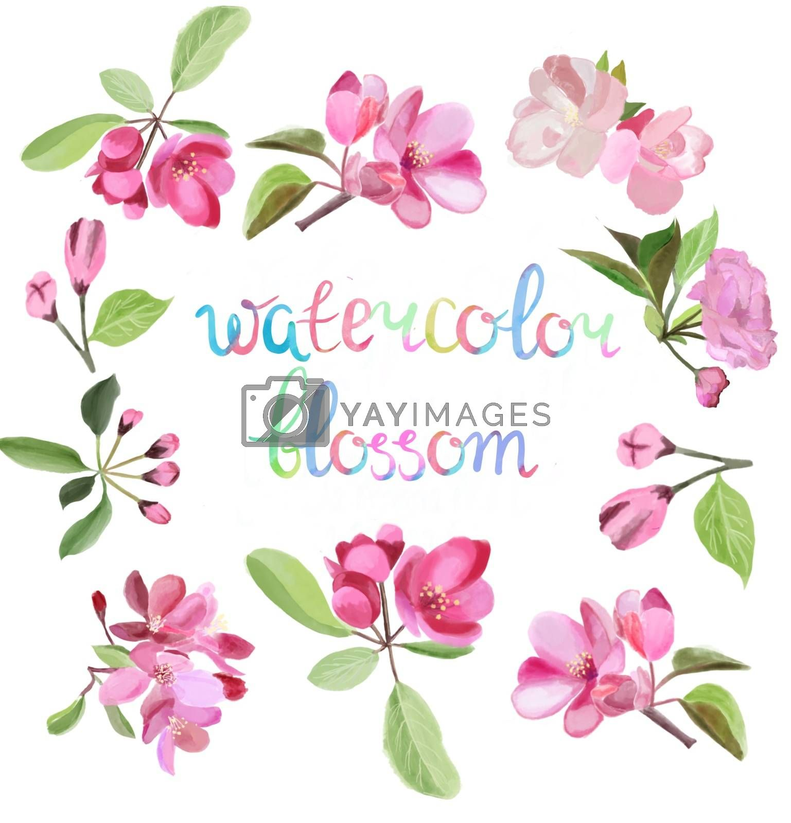 Watercolor beauty illustration with blossom pink cherry and apple tree flowers and inscription watercolor blossom.