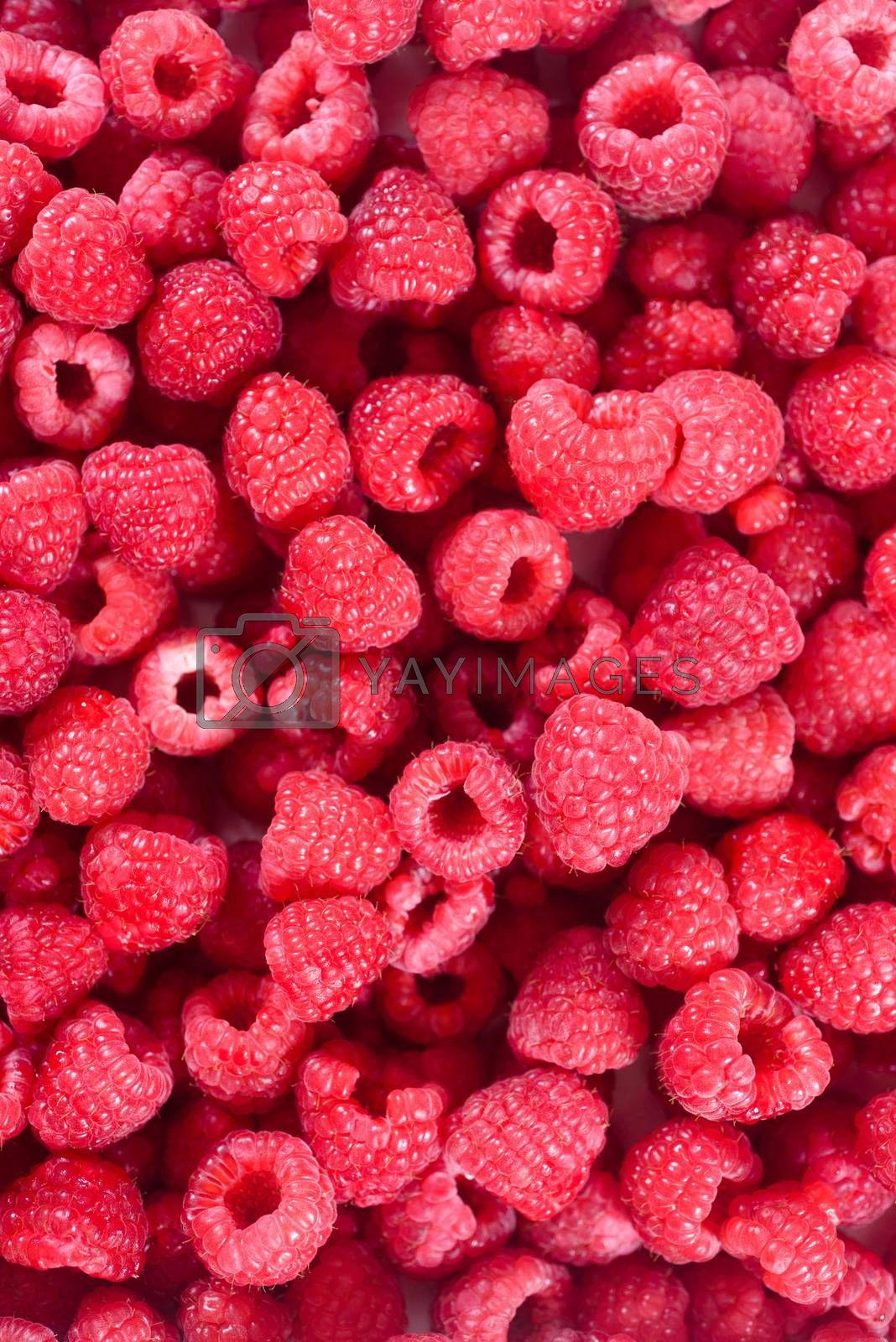 Fresh raspberries background closeup. Ripe Delicious berries. Healthy food organic concept.
