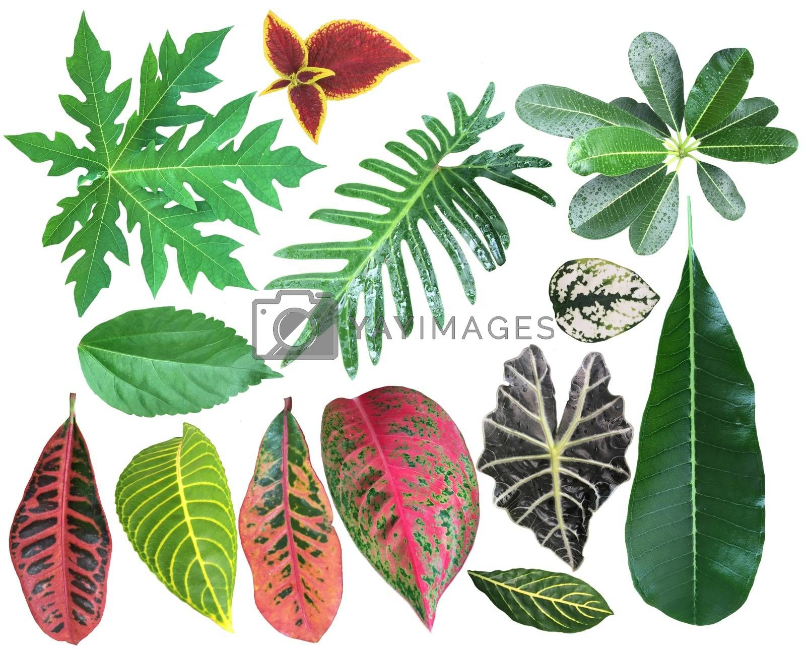 Set of tropical green leaves isolated on white background. Collection of Different exotic houseplants leaves.