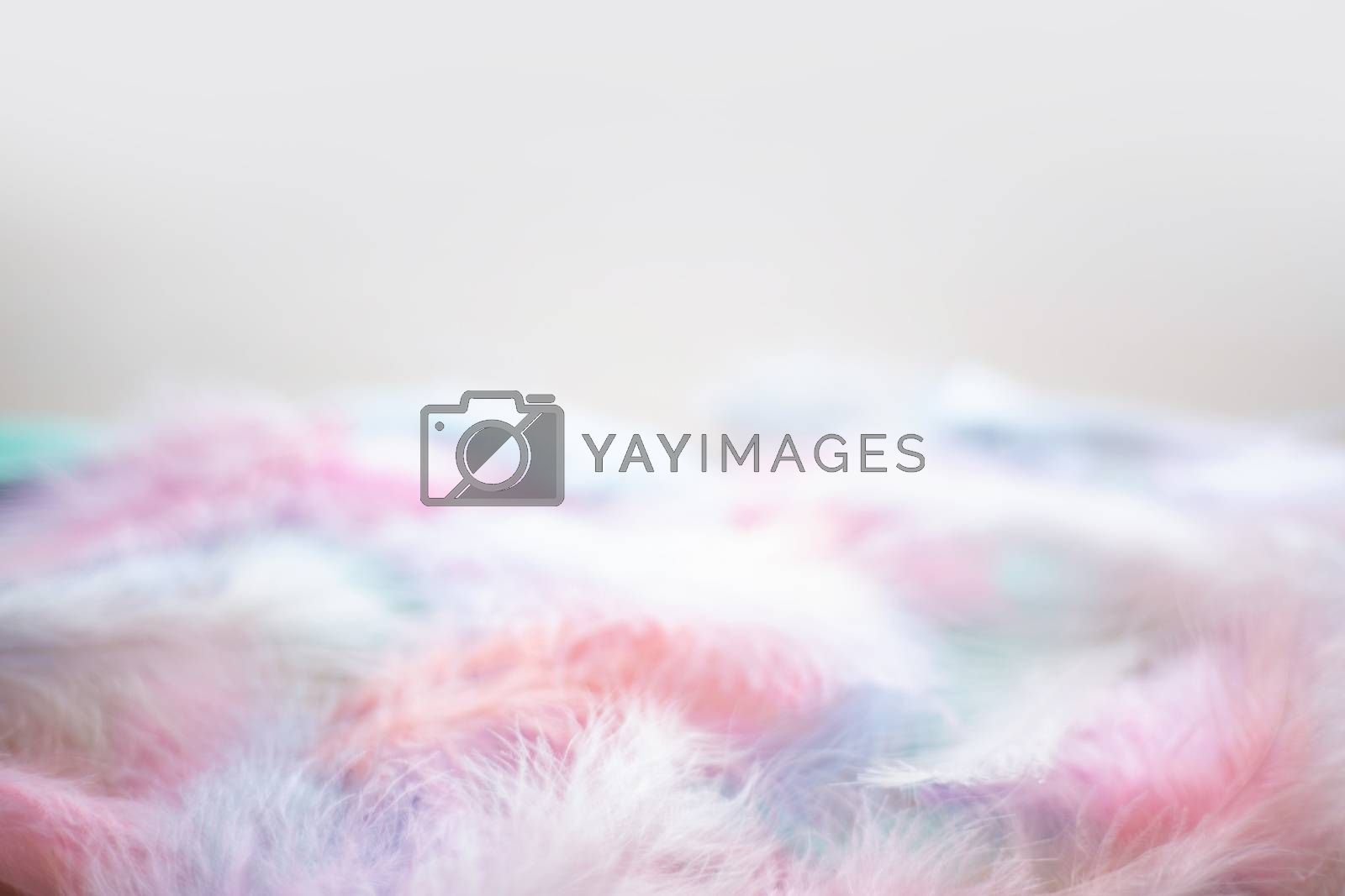 Coral Pink blue green pastel colored color trends feather texture background easter holiday softness concept