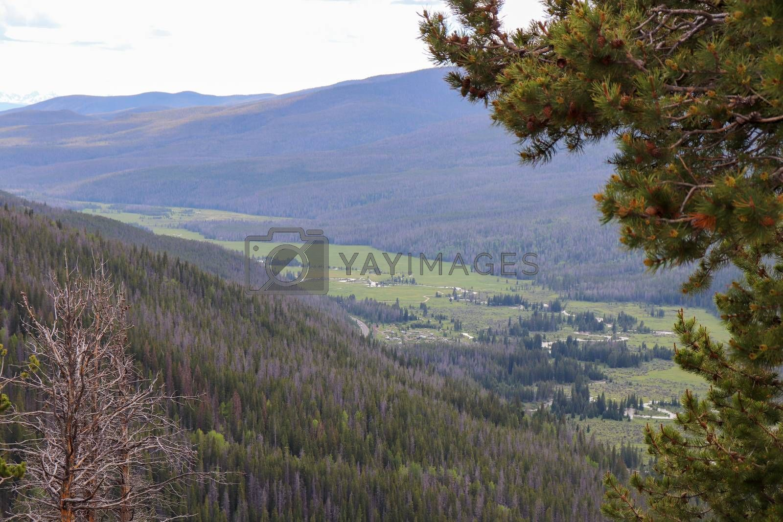 A view of the green landscape covered Colorado mountains