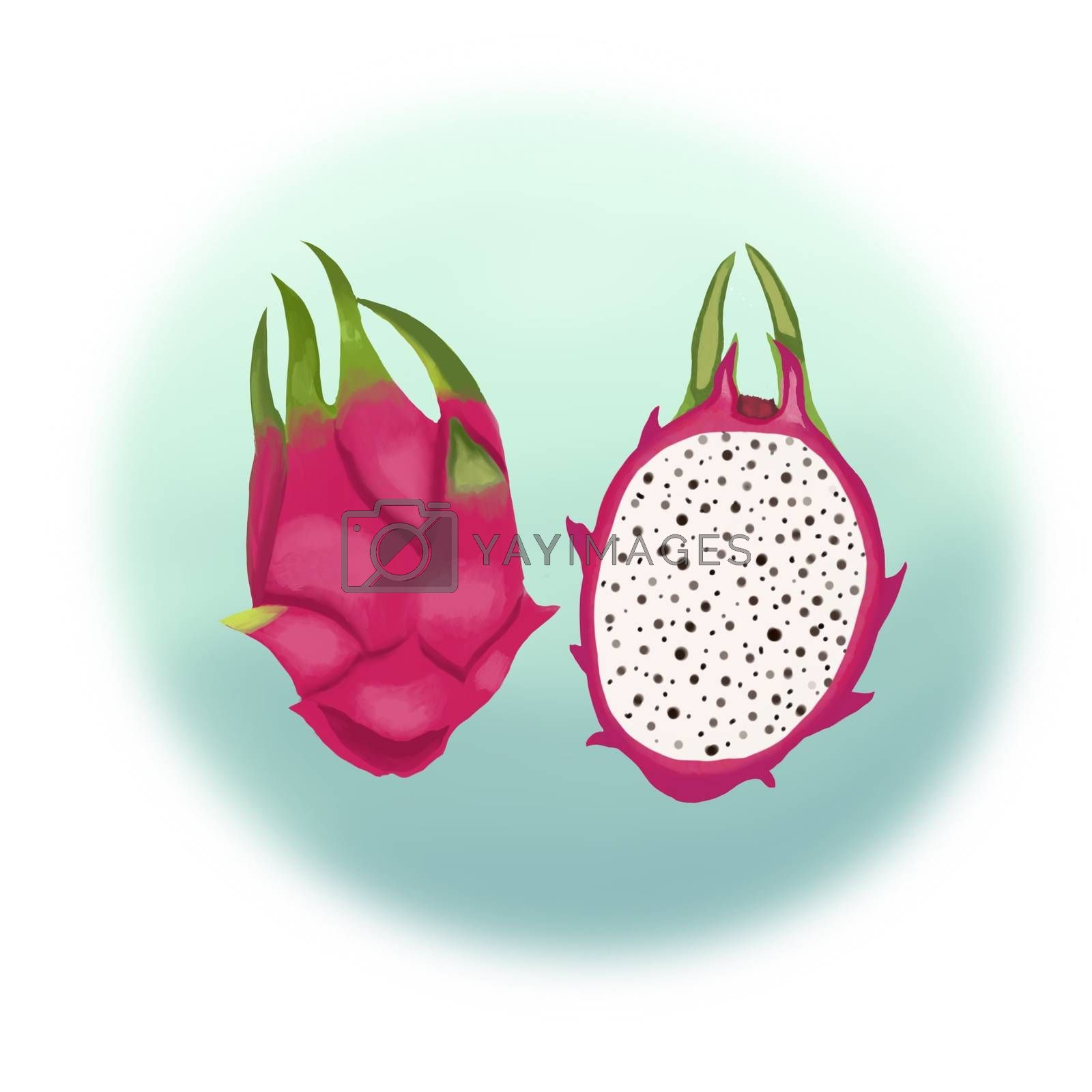 Dragon fruit Half of the cut fruit. Hand drawn illustration of whole and half of Ripe exotic Dragon fruit.