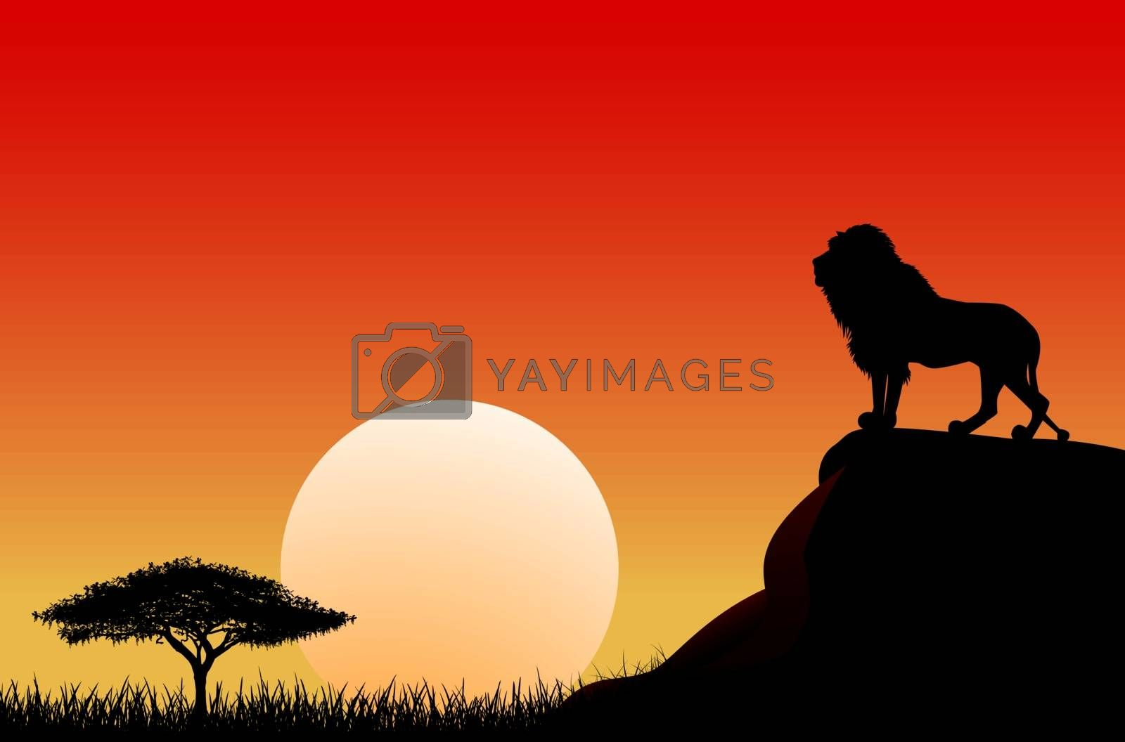 An African lion stands on a stone against the background of the sun. Sky, sun, sunset. The nature of the African savanna.