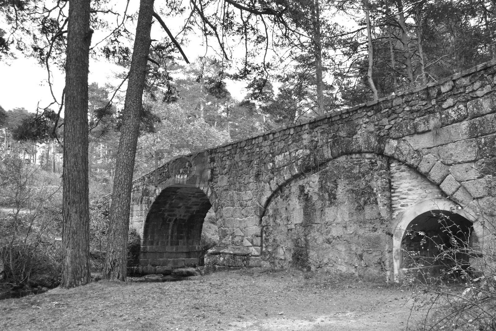 Stone bridge on a path of a forest in black and white