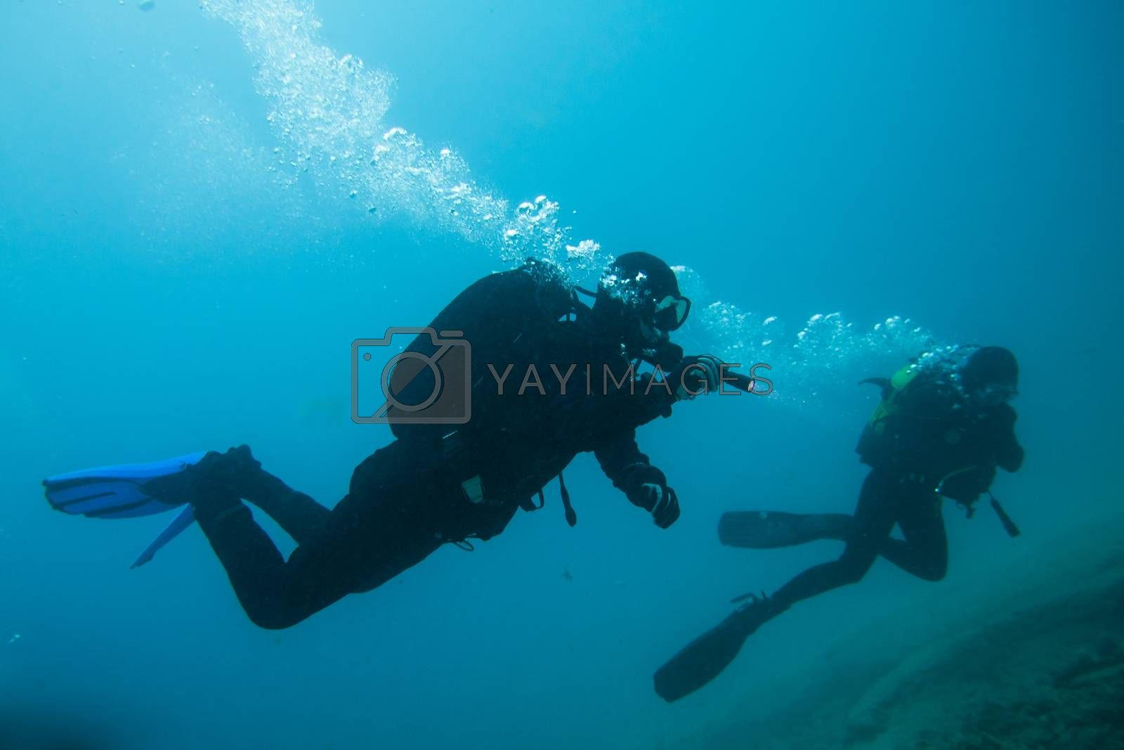 divers in immersion near the reef, fuerteventura canary islands