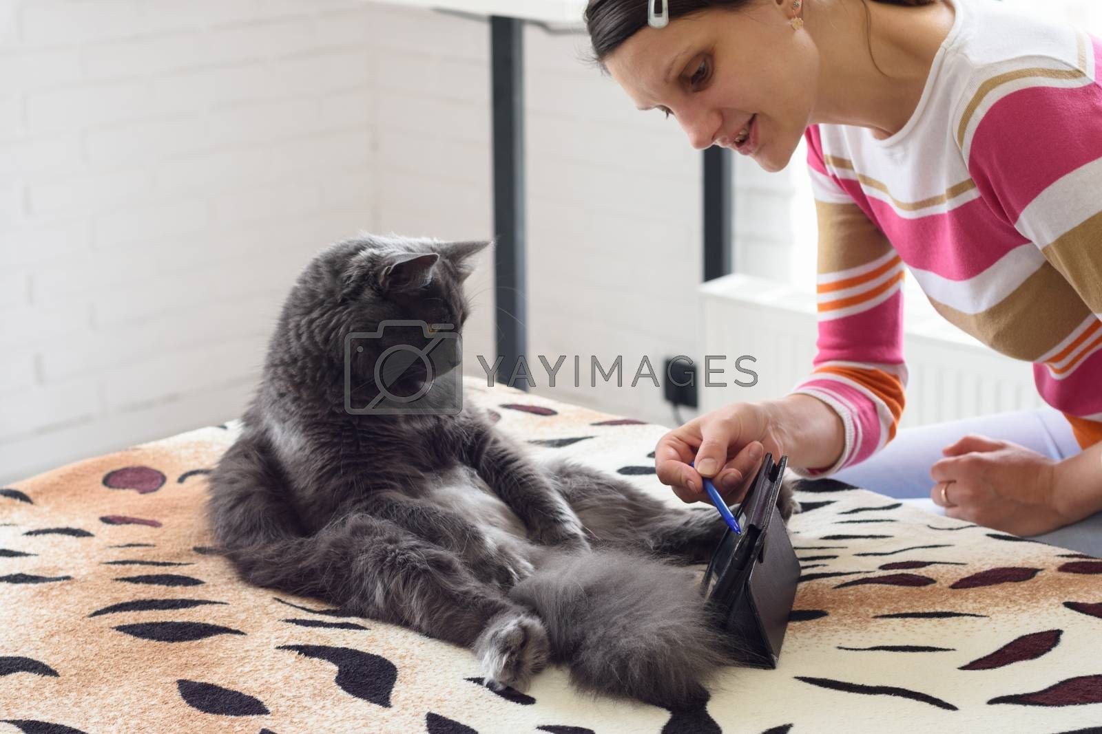 The girl put a tablet computer in front of the cat and is trying to teach him