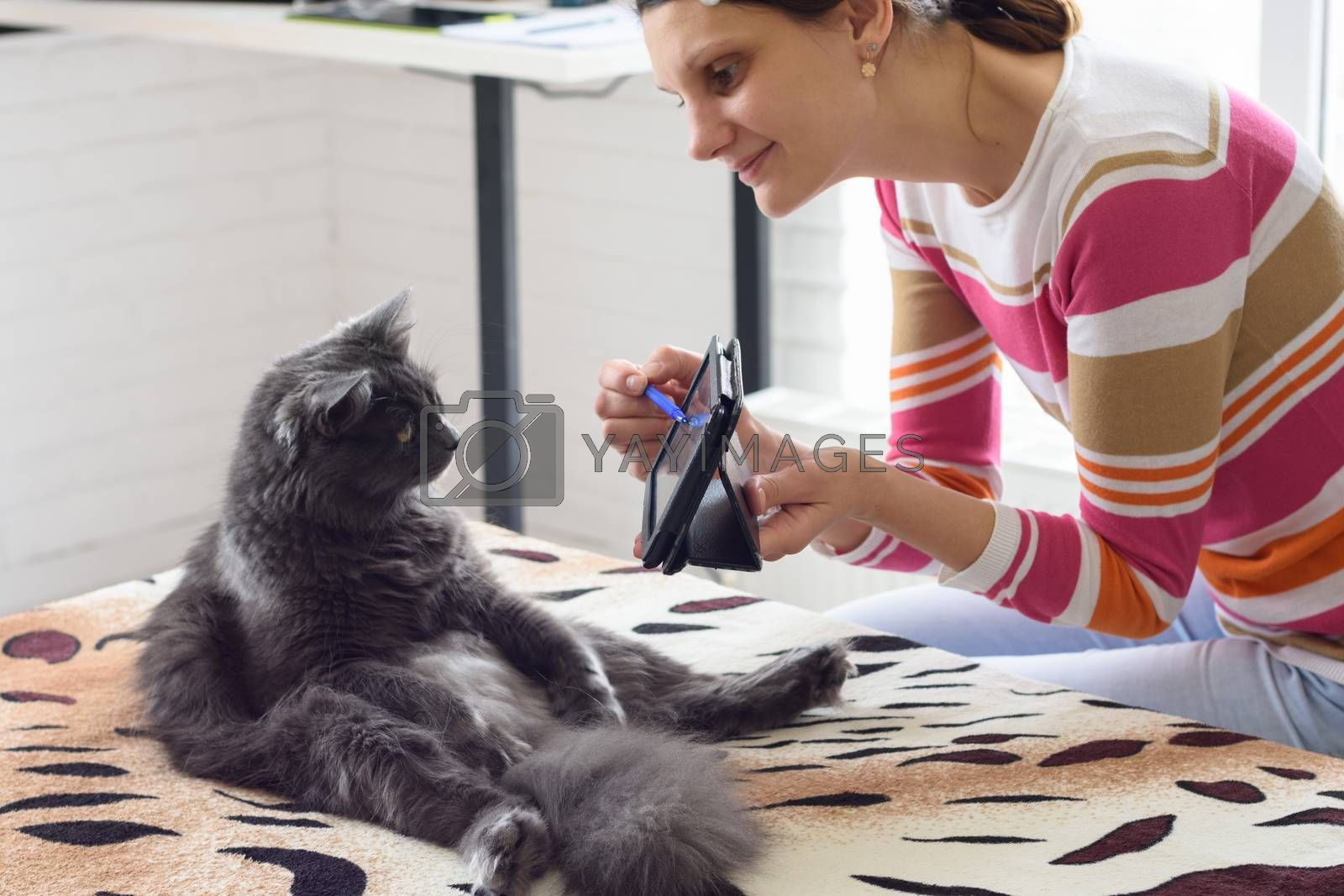 Girl shows the cat sitting on the bed, tablet computer screen