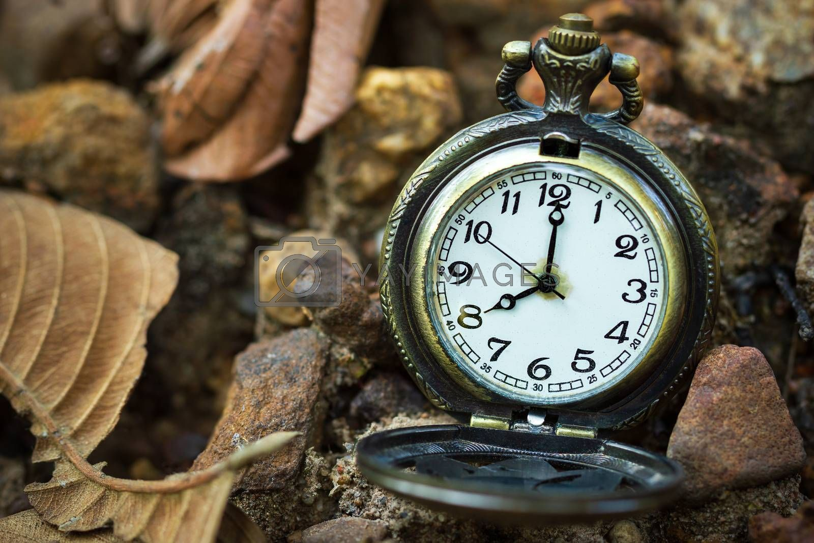 Vintage old pocket watch placed on the ground in forest and morning sunlight. At 8 o'clock. Closeup and copy space.