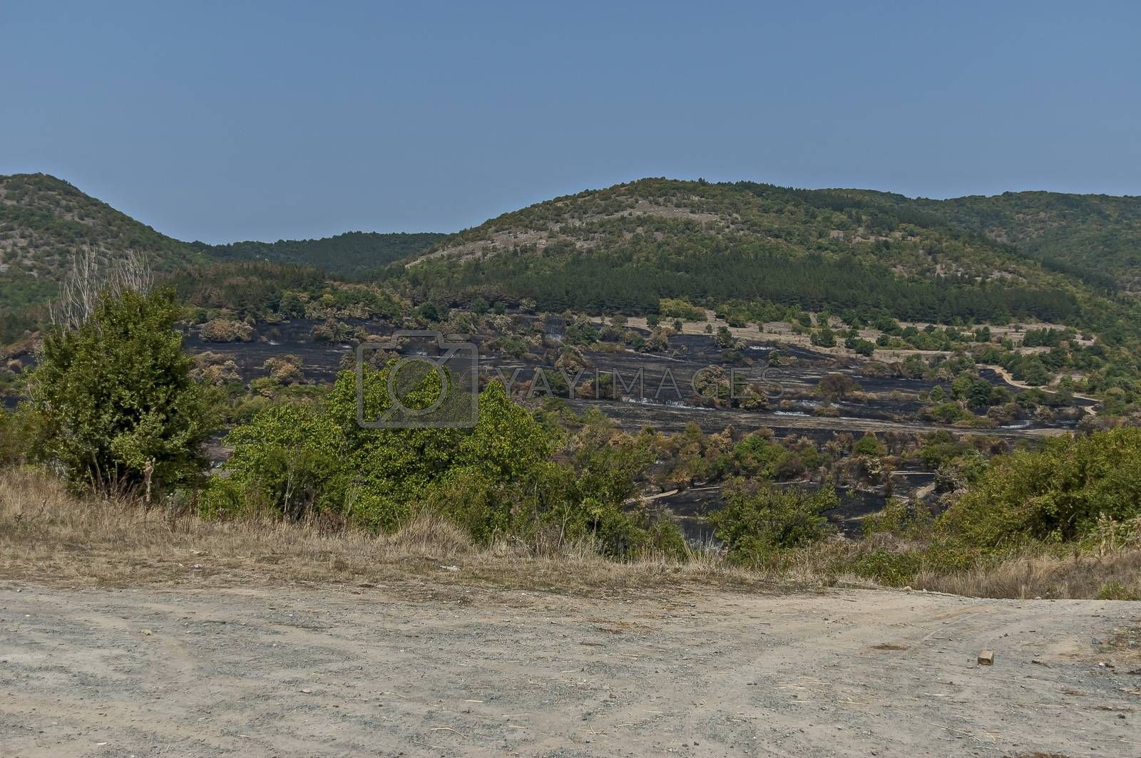 View of after forest fire in the Sredna gora mountain, Bulgaria