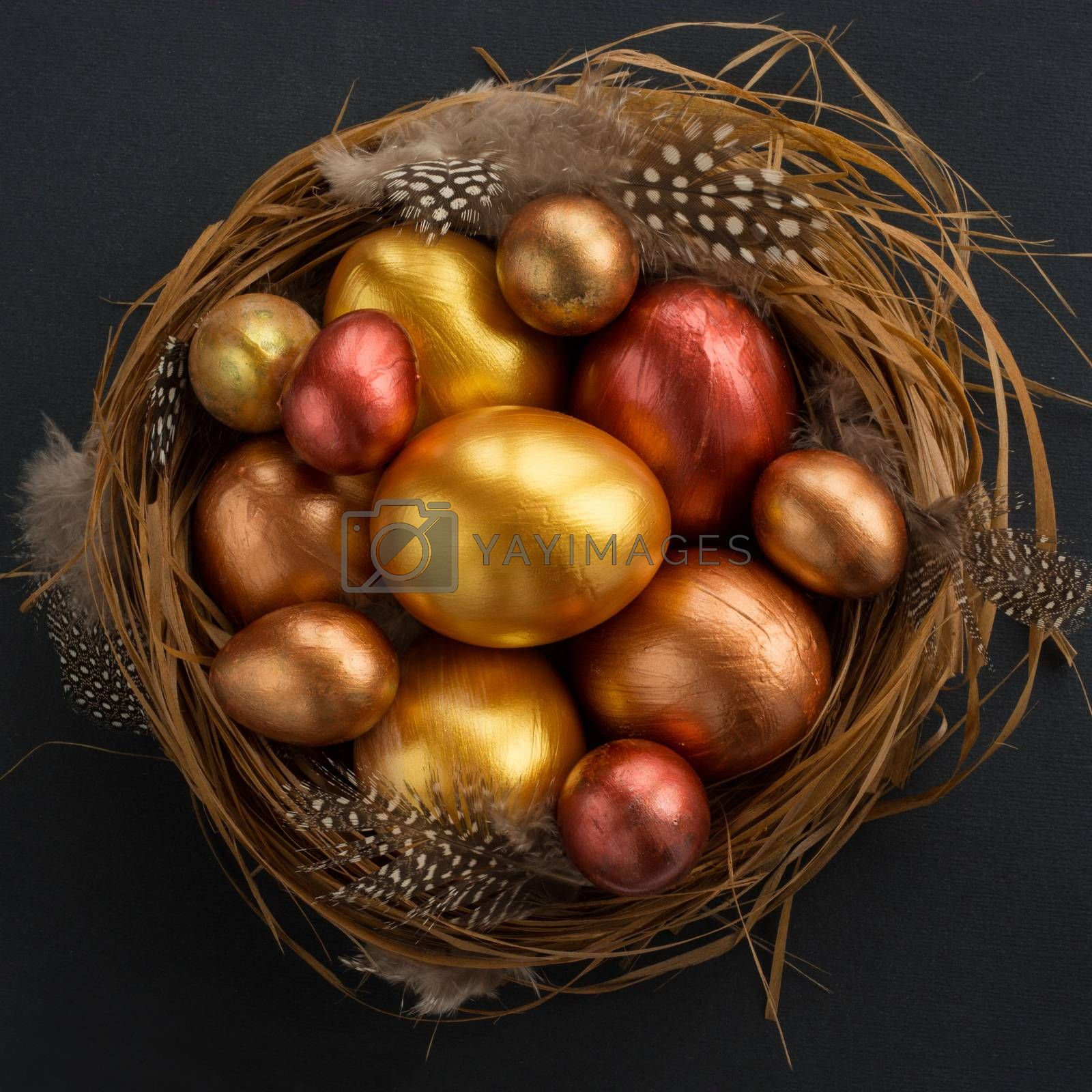 Happy Easter holiday greeting symbol stylish natural wooden grass nest with golden quail eggs on black background