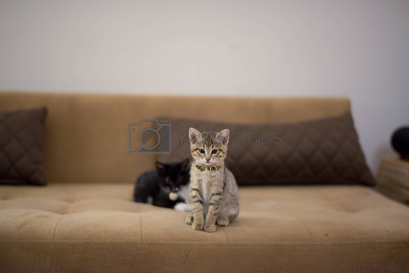 Cute kitten at home, baby cat