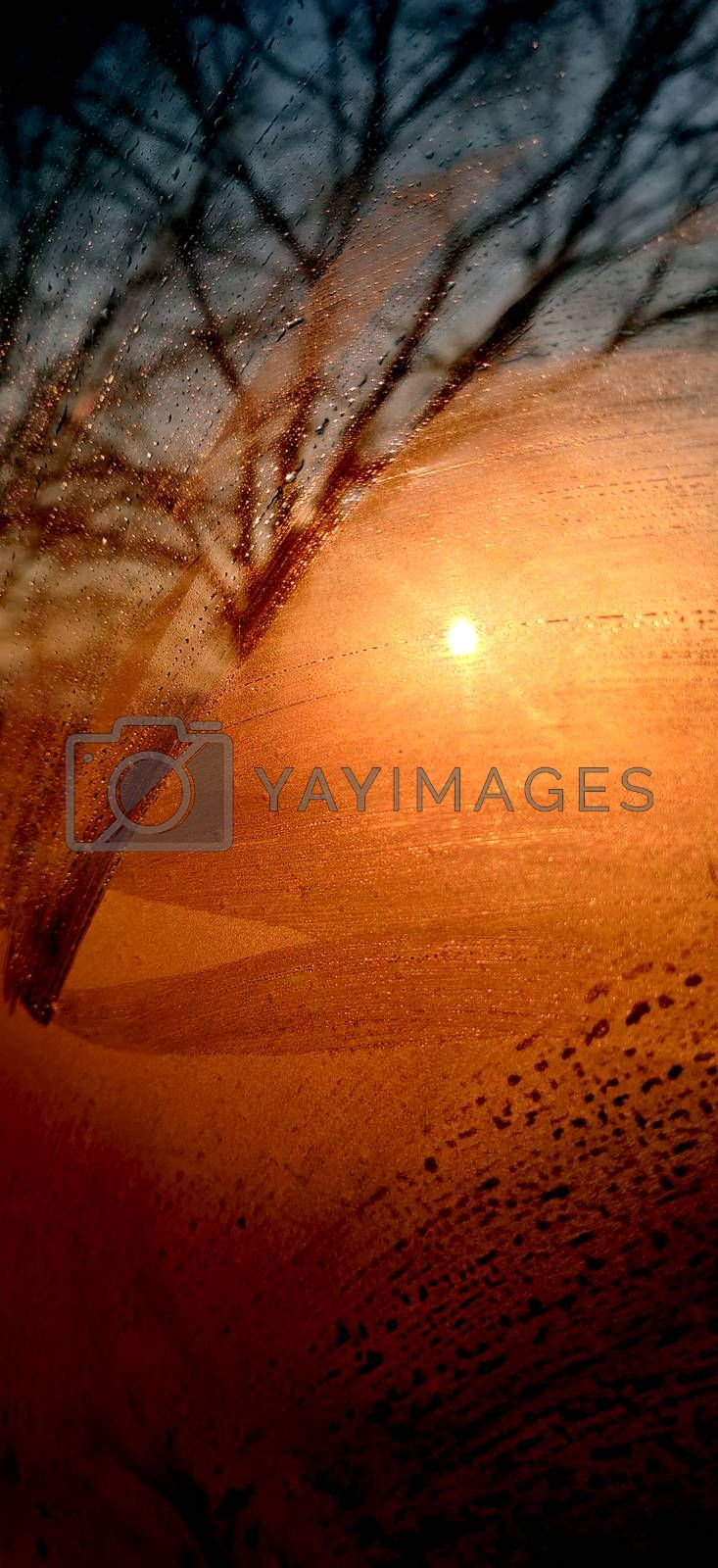 Abstract image of sunrise seen through foggy glass and textured tree.