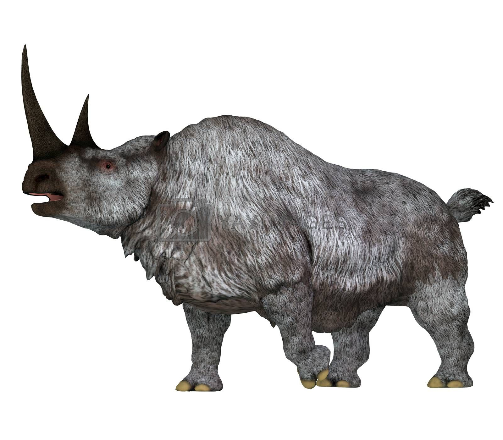 The Woolly Rhino was a herbivorous rhinoceros that lived in Asia and Europe during the Pleistocene Period.