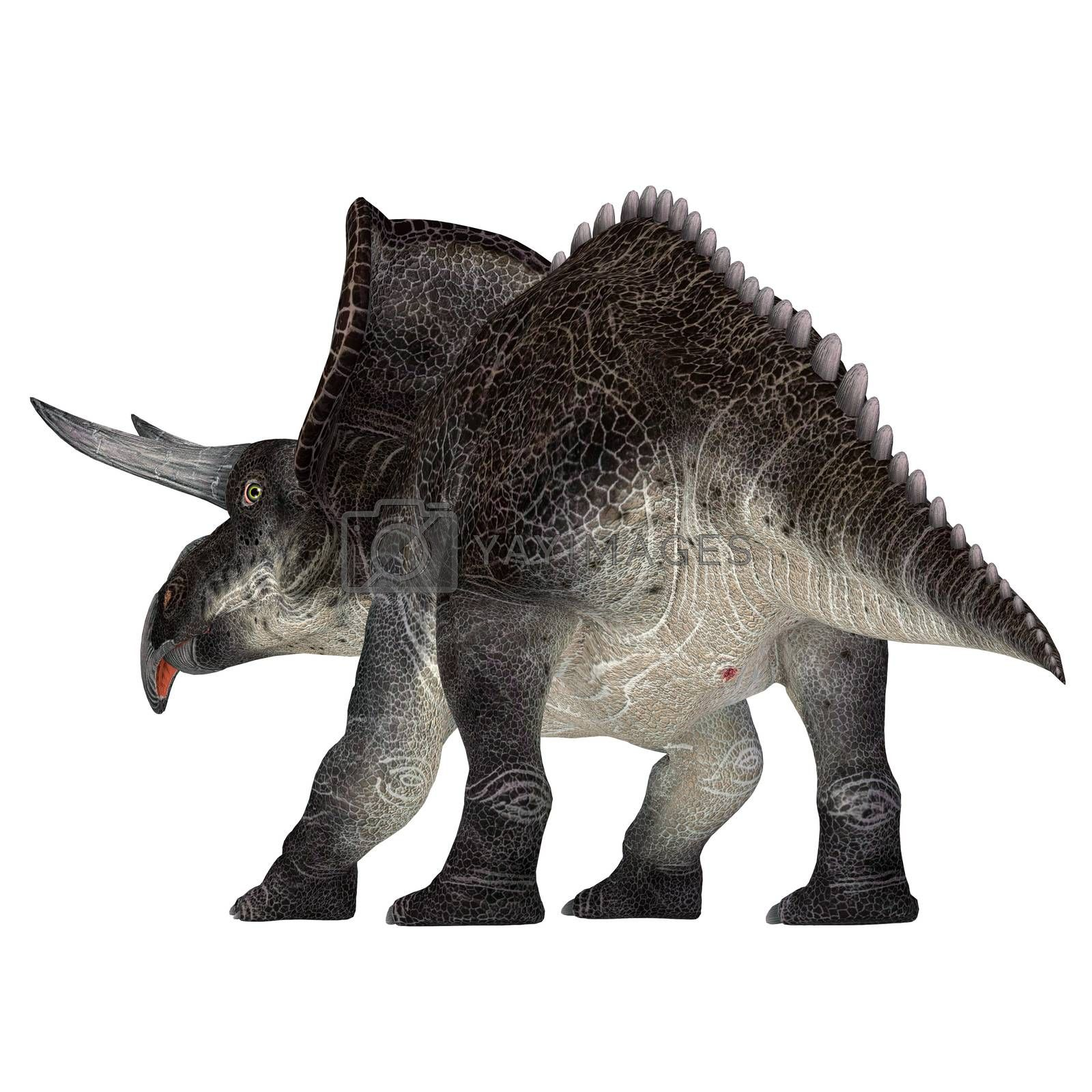 Zuniceratops was a herbivorous Ceratopsian dinosaur that lived in New Mexico, United States during the Cretaceous Period.