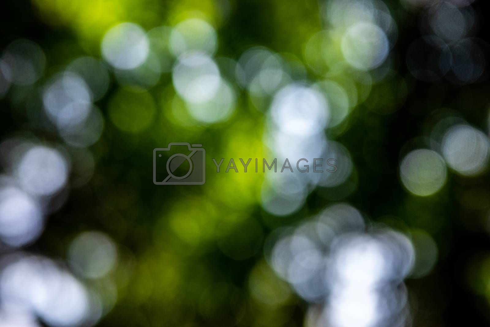 Blurry scene of sunlight through green leaves in tropical rainforest in defocusing technique.