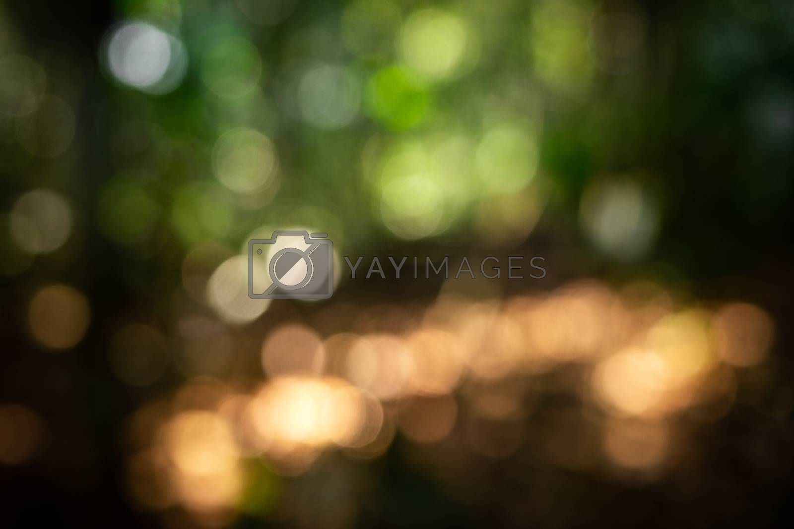 Blurry scene of sunlight through green leaves over brown ground inside tropical rainforest in defocusing technique.